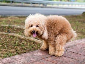 hund-hat-durchfall