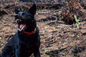 hund_zeigt_zähne