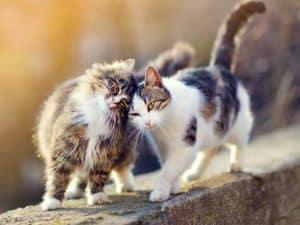 zwei katzen rollig