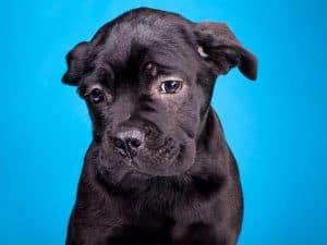können hunde weinen