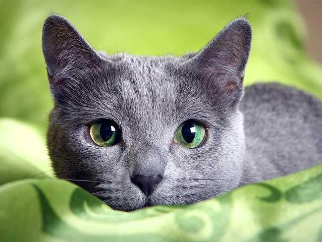 können-katzen-farben-sehen