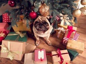 Weihnachtsgeschenke-für-Hundebesitzer