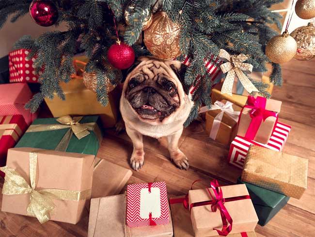 Weihnachtsgeschenke Keine Idee.Weihnachtsgeschenke Für Hundebesitzer Die Top 15 Geschenk Ideen