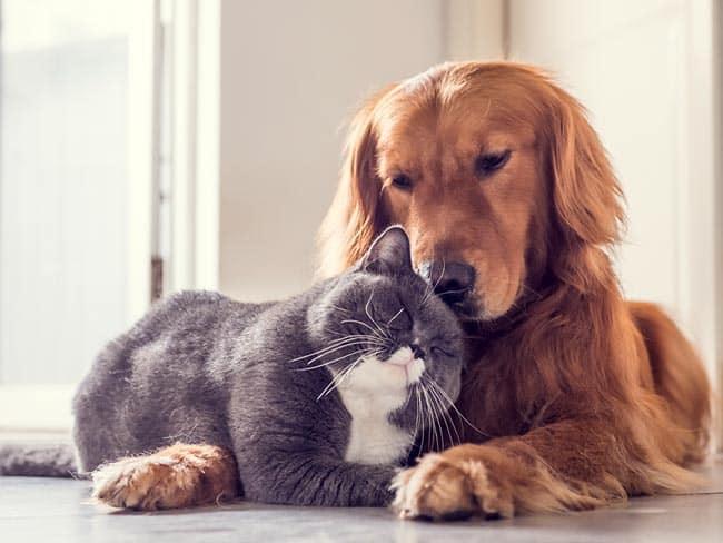 Katzen-Dating-Seite