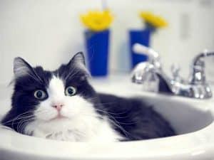 katze-liegt-im-waschbecken
