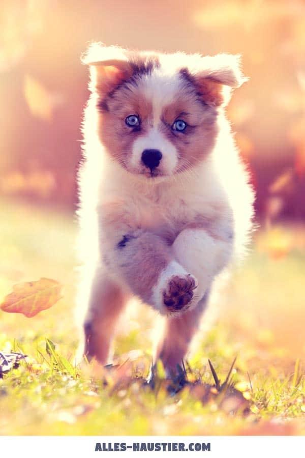 Diese 21 Total Susse Hunde Sind Einfach Zum Verlieben Alles Haustier