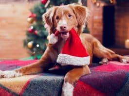 weihnachtgeschencke für hundebesitzer