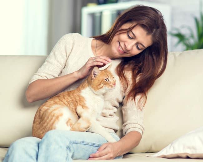 Wie-Katzen-Lieben-und-Ihre-Zuneigung-zeigen
