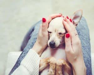 Allergien bei Hunden