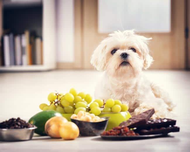 giftige-lebensmittel-für-hund