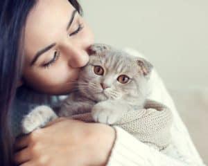 ist eine katze das richtige haustiier