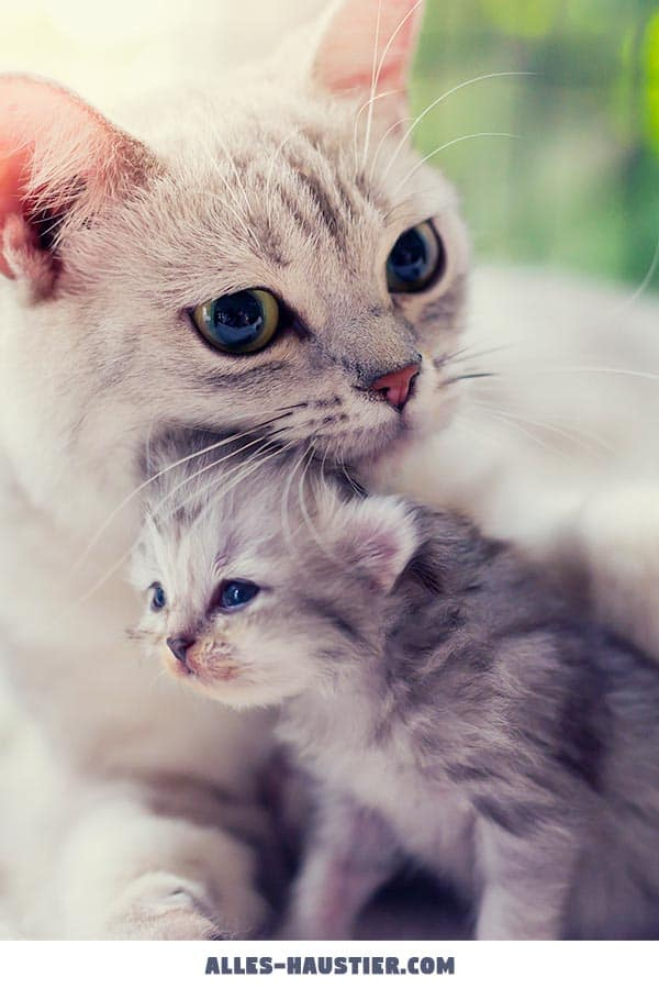 Katze mit Kätzchen