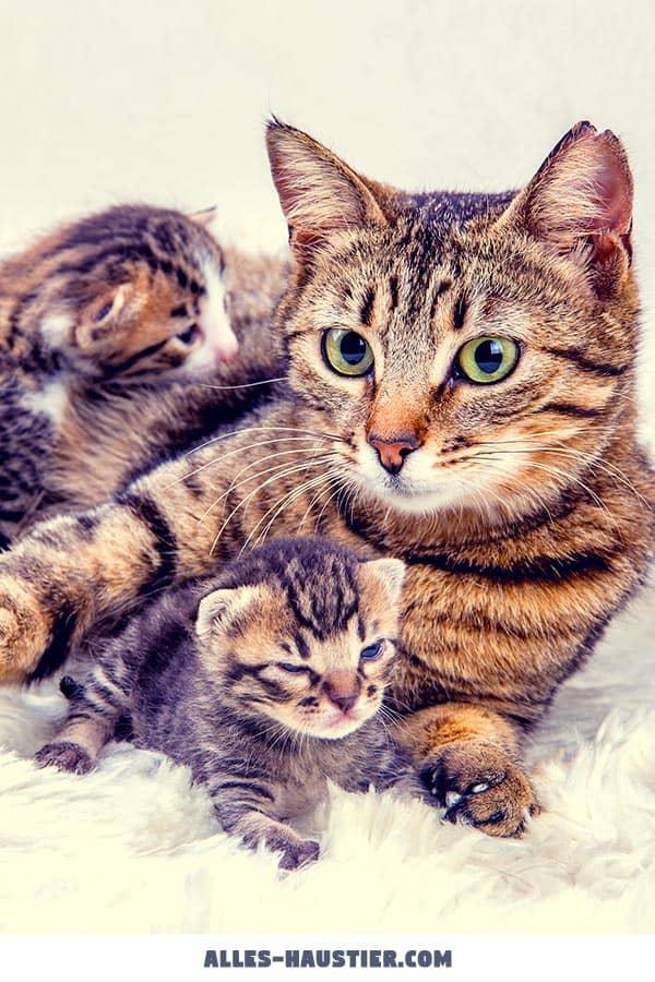 Katzenmutter mit Kätzchen