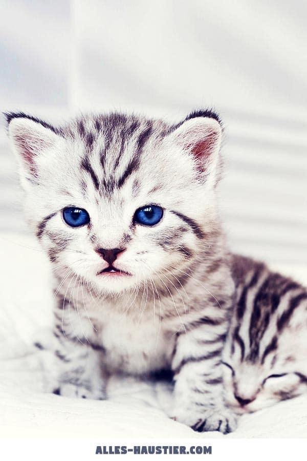 Süßes Katzenbaby Kätzchen