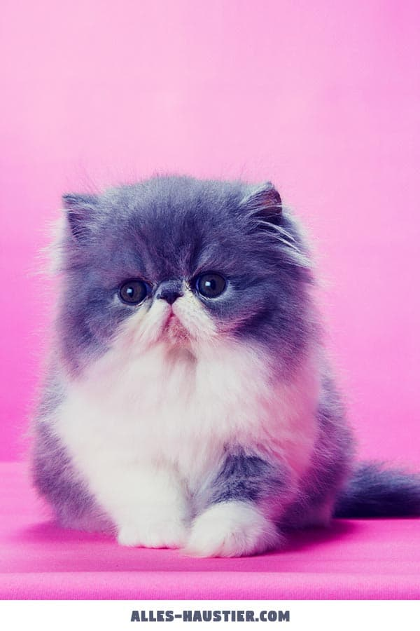 Katzenbaby traurig mit süßem Blick