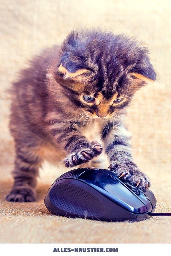 Katzenbaby spielt mit Maus