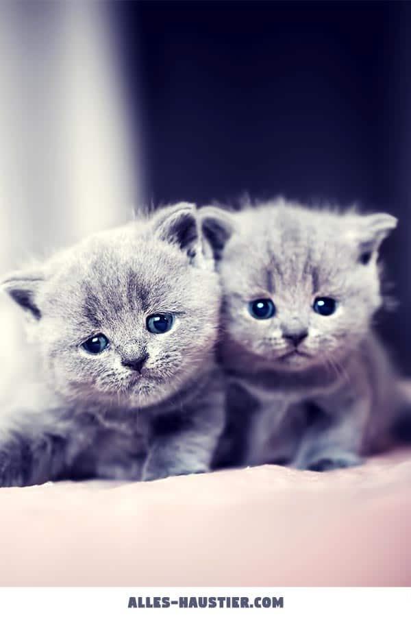 Zwei süße Katzenbabys