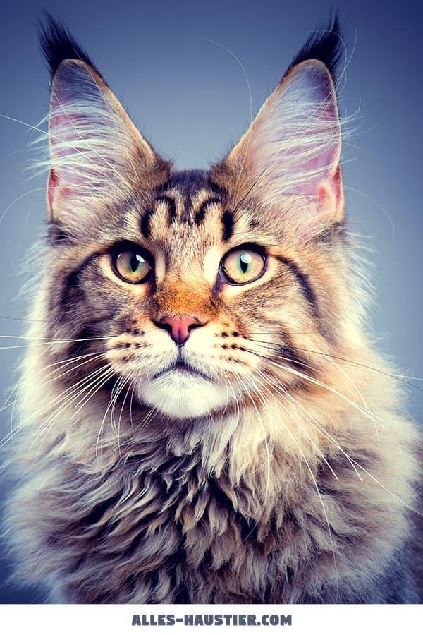 Wunderschöne Katze im Portrait