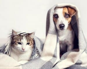 warum-Katzen-besser-sind-als-Hunde