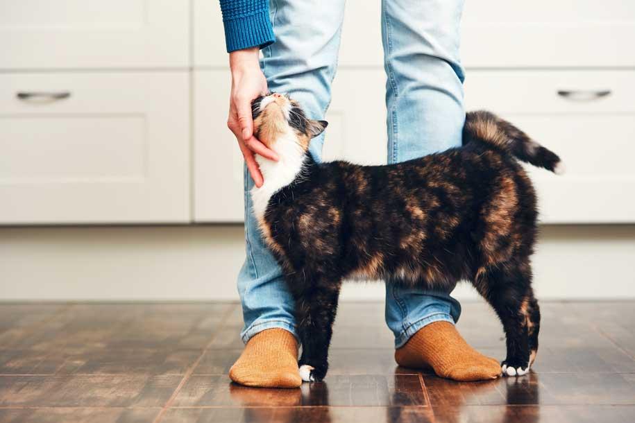 Was Katzen lieben