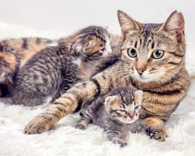Katzenmutter mit Kitten