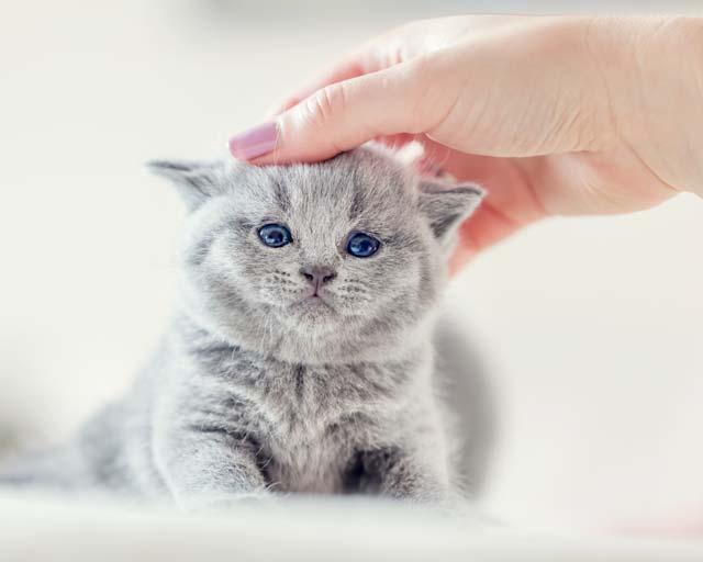 katzenerziehung katze belohnen