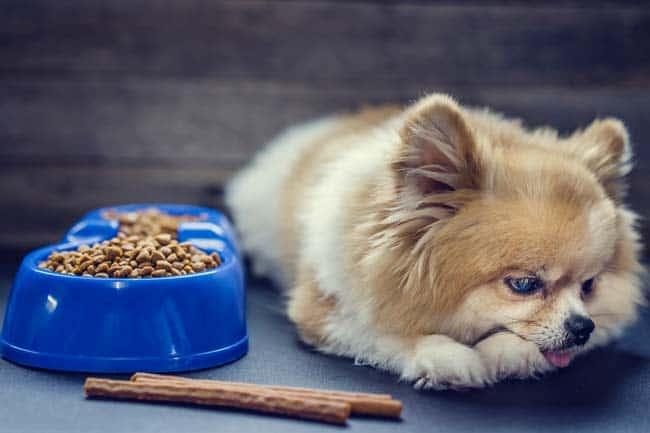 Appetitlosigkeit wegen Schmerzen beim Hund