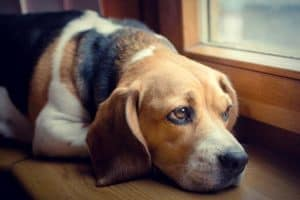 Hund Schmerzen