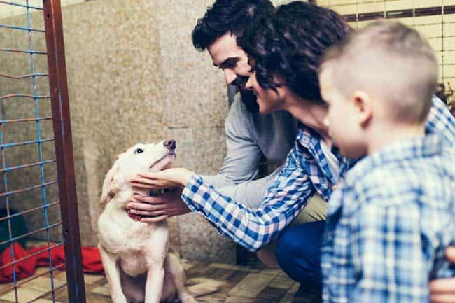 Hund-adoptieren