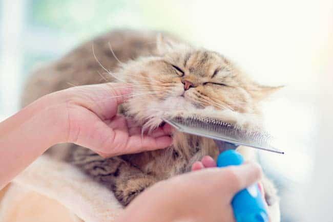 Fellpflege bei Katze