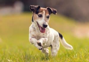 öko-hund