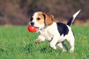 Dein Hund Hat Schuppen Ursachen Und Was Du Tun Kannst