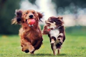 Öko-Hundezubehör