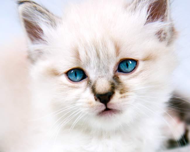 Katze weint tränende augen