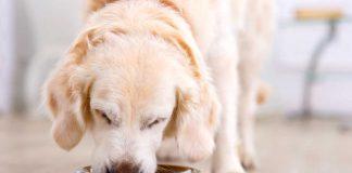 Nahrungsergänzungsmittel-Hunde