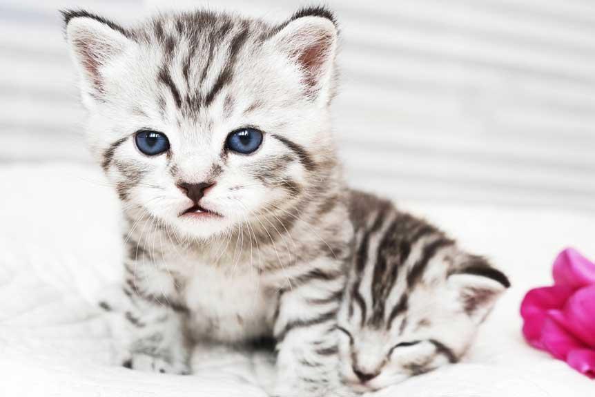 junges-kätzchen