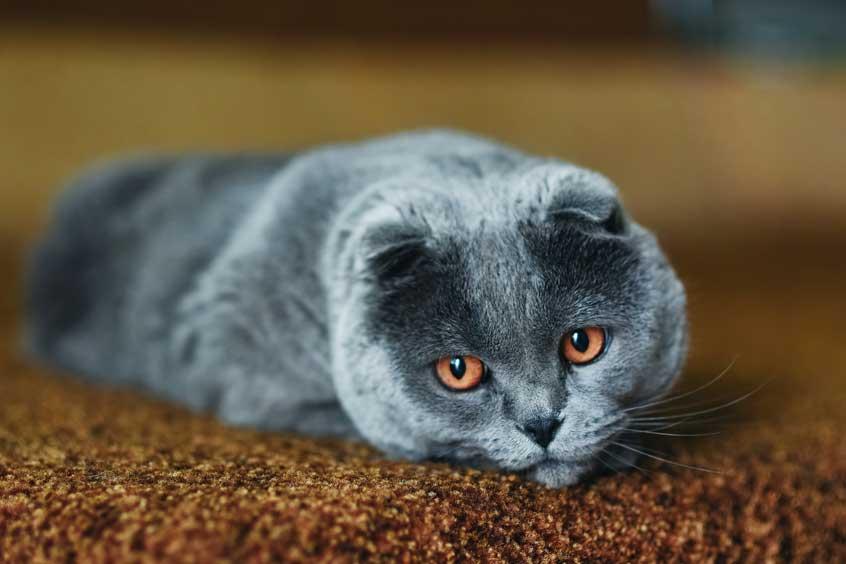 Wenn Tun, Wenn Die Katze Erbricht? Unsere Tierärztin Klärt Auf
