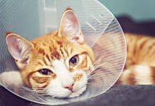 Katze Notfall