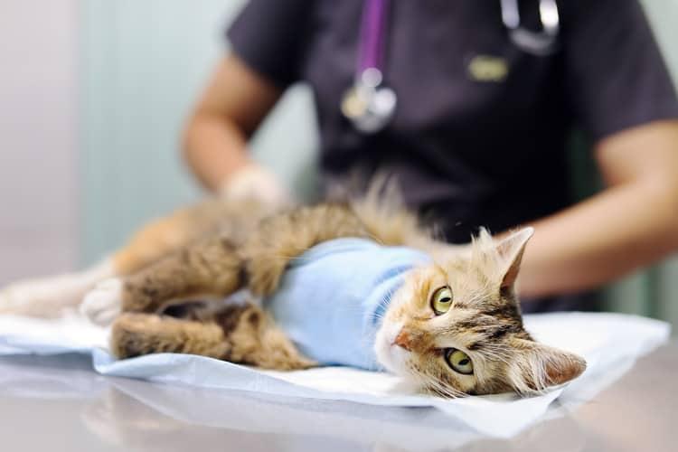 Tierkrankenversicherung für Katzen
