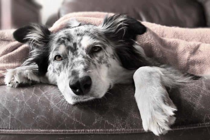 hund einschläfern