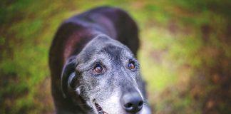 Krebs beim Hund