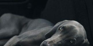 Magendrehung beim Hund