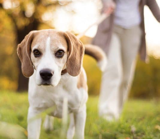 warum fressen hunde kot
